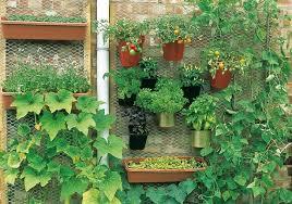 urban garden 4