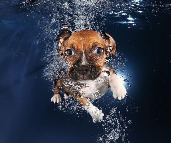 Cães mergulhando03