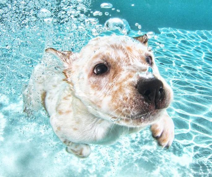 Cães mergulhando04