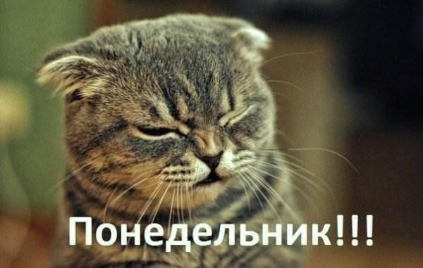 Смешные и прикольные картинки про понедельник (50 шт) - OMORO