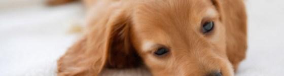 dog_pc_001