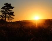 Golden sunrise on the Ashdown forest