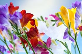 Sunn and flowers