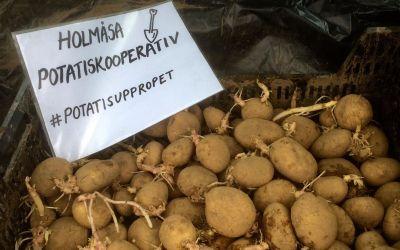 Holmåsa potatiskooperativ sätter guld i åkern