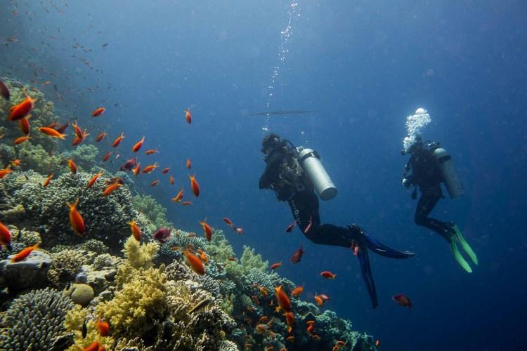 Jacksons Reef in Ägypten