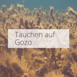 Tauchen auf Gozo im Mittelmeer