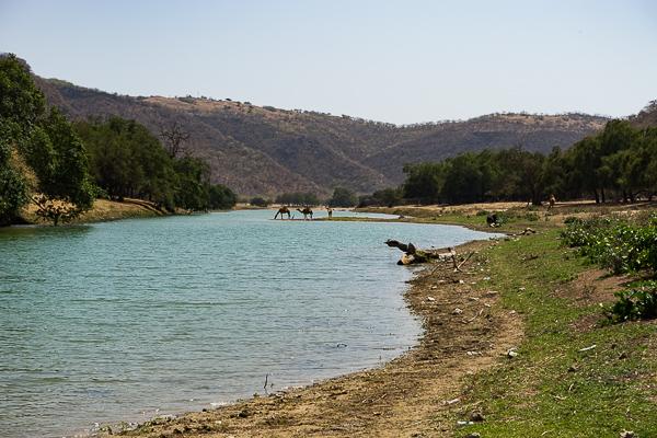 Wadi Darbat im Oman