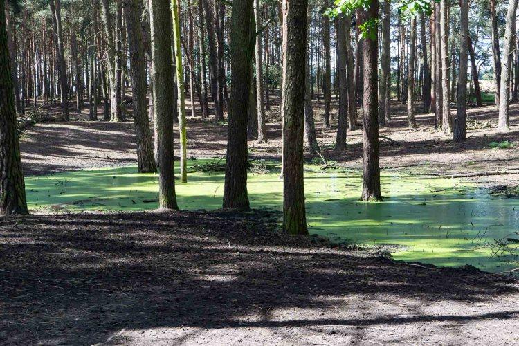 Waldlandschaft in der Schorfheide
