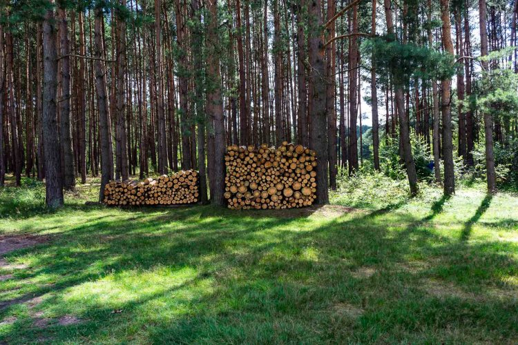 Waldlichtung mit Baumstämmen in der Schorfheide