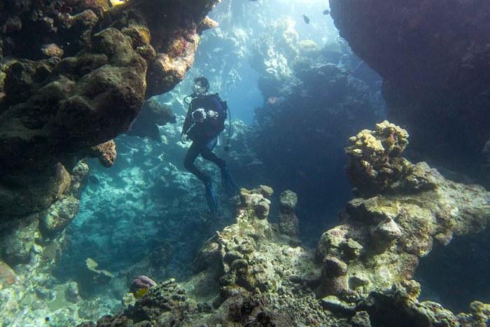 Taucher zwischen Korallen