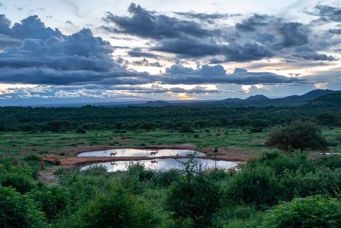 Blick auf das Wasserloch in Tsavo West