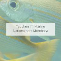 Tauchen im Mombasa Marine National Park