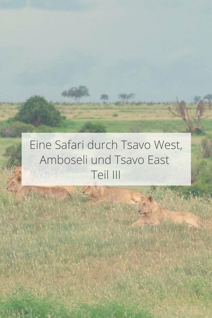 Safari durch in Nationalpark Tsavo East in Kenia