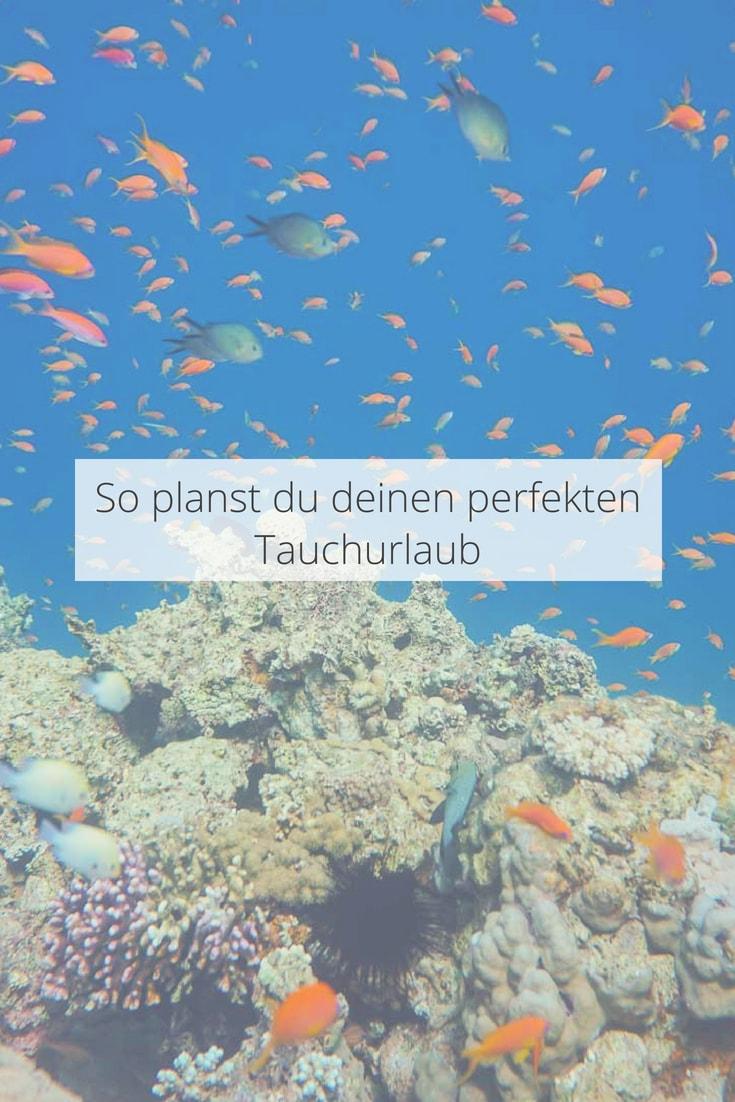 So planst du den perfekten Tauchurlaub