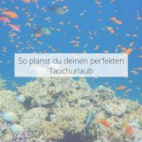 So planst du deinen perfekten Tauchurlaub