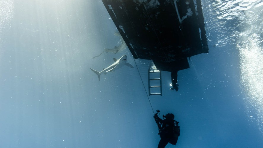 Blauhai unter dem Boot mit Taucherin