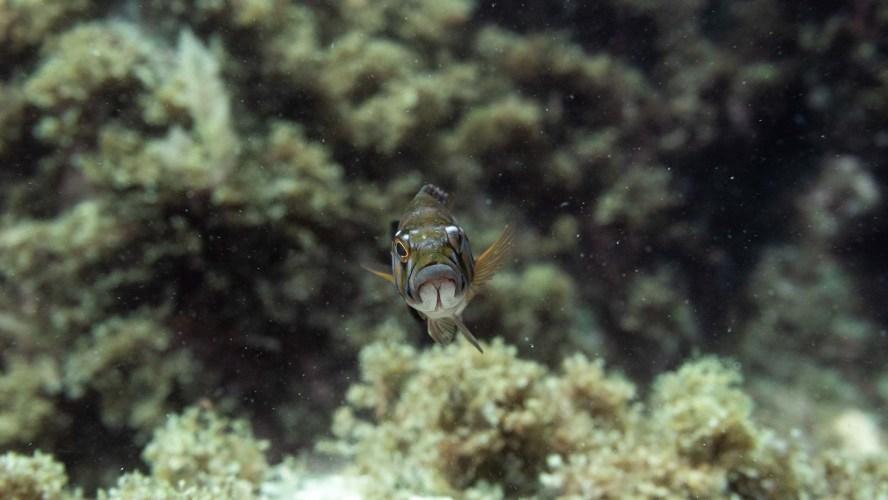 Nahaufnahme von einem Fisch