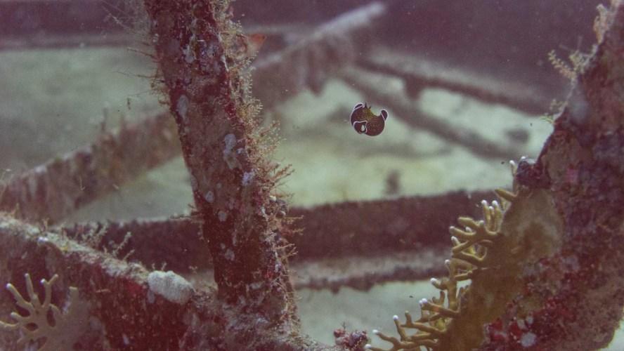 Nudibranch am Wrack der Million Hope