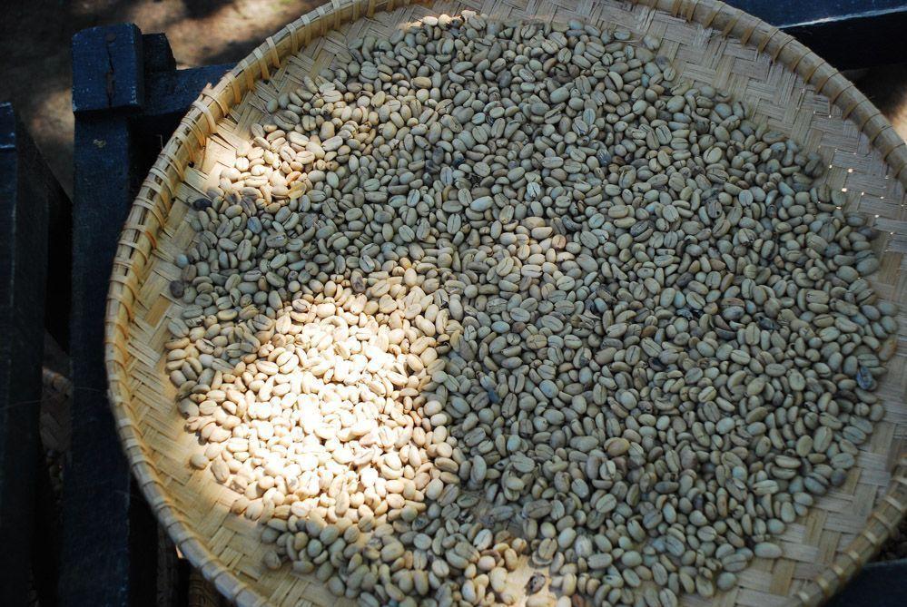 café-Indonesia