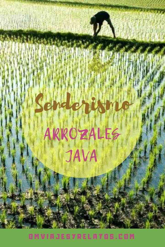 los-arrozales-Java
