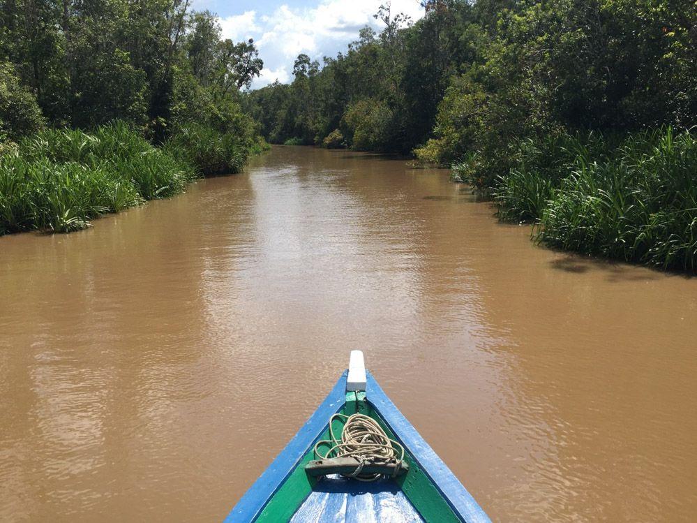 Borneo-tour-Orangutanes-Indonesia