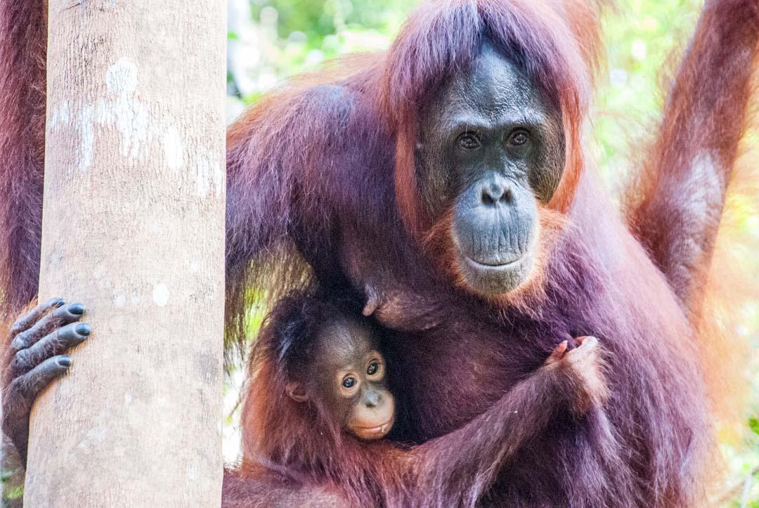 Borneo-Indonesia-excursión