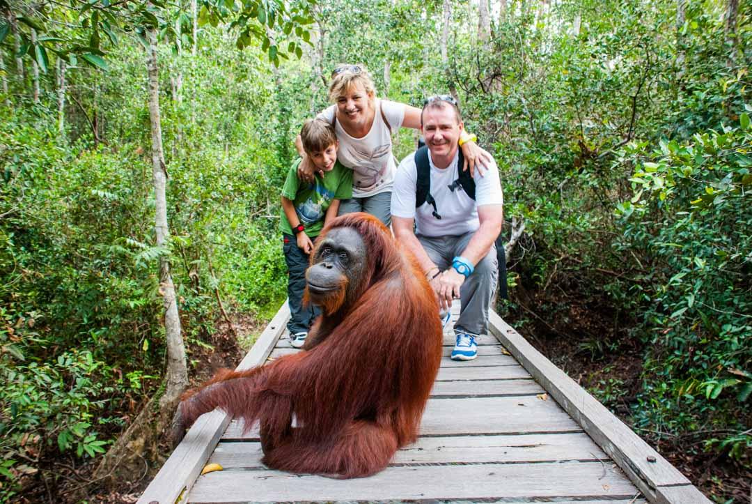 Tanjung-Puting-Orangutanes