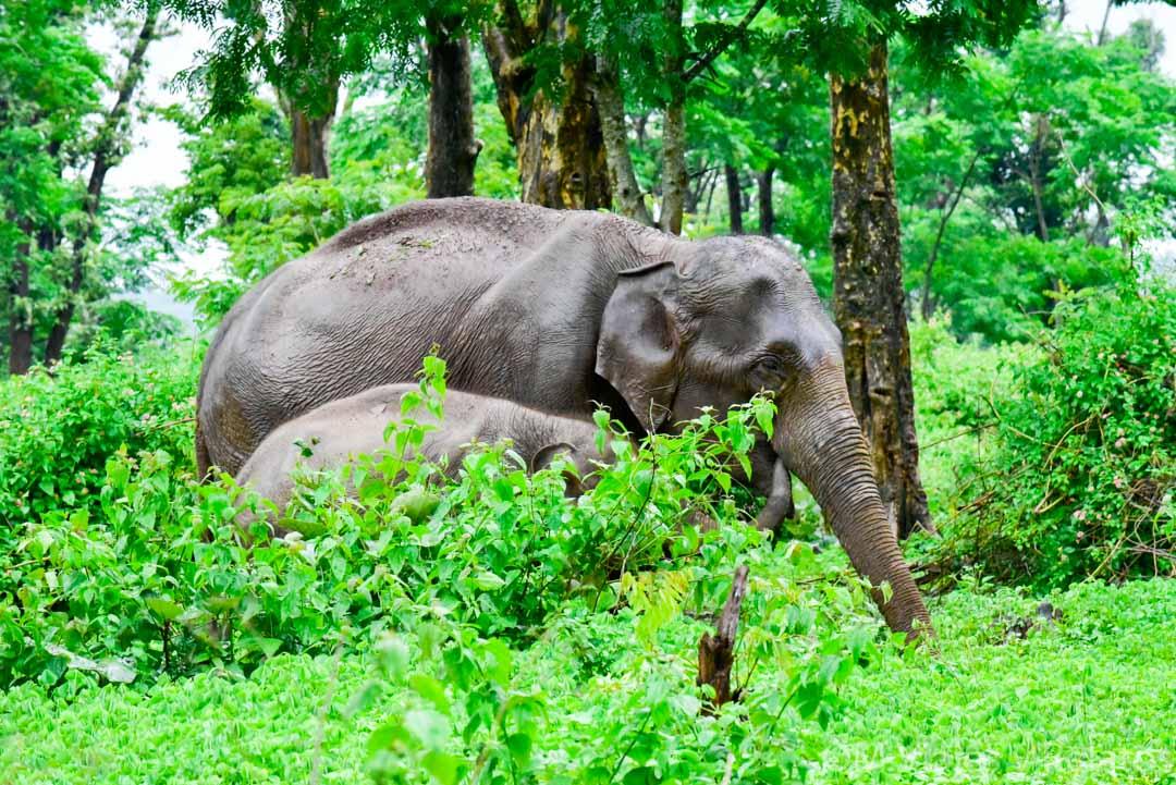 escenarios-del-Libro-de-la-Selva-India