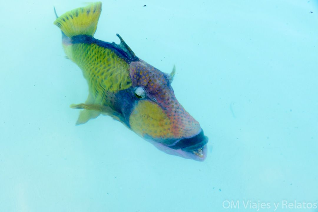 buceo-en-islas-Maldivas