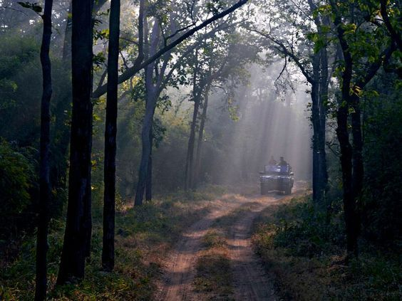 safari-tigre-India