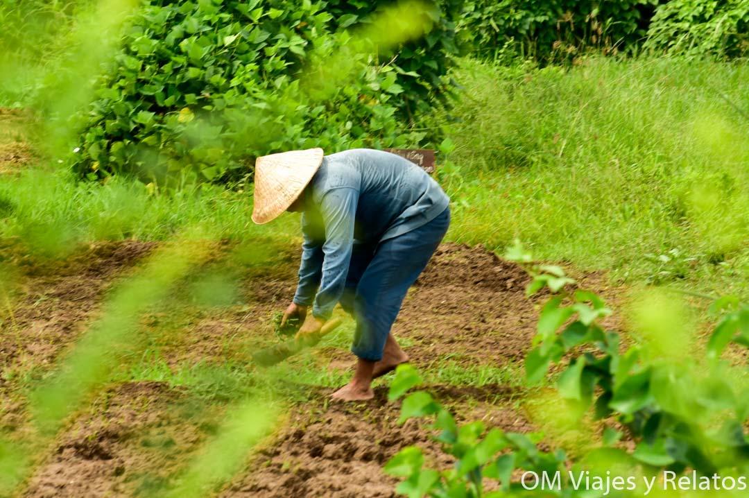 arrozales-Vietnam-Mekong