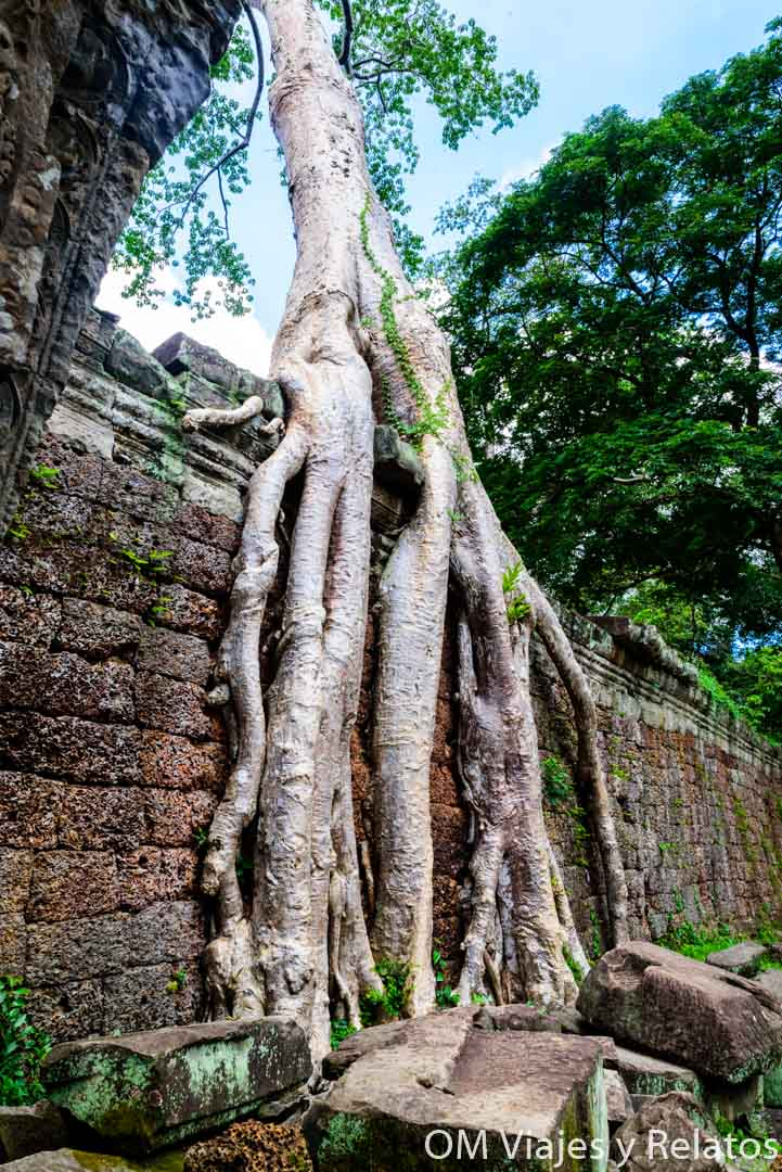 selvas-Angkor