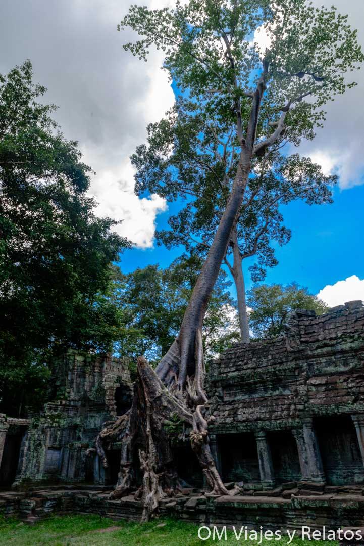 templos sagrados Angkor