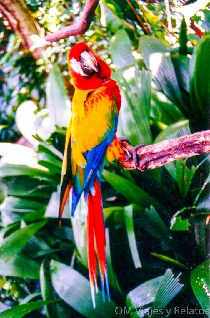 Costa-Rica-Turismo