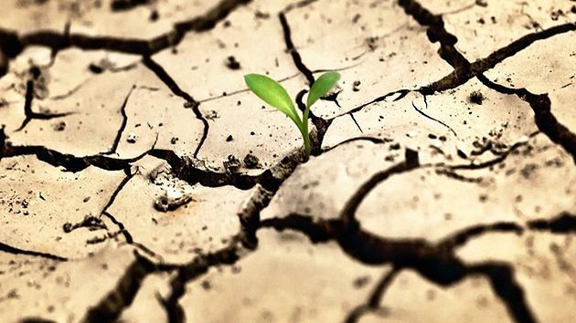 Засуха1.jpg