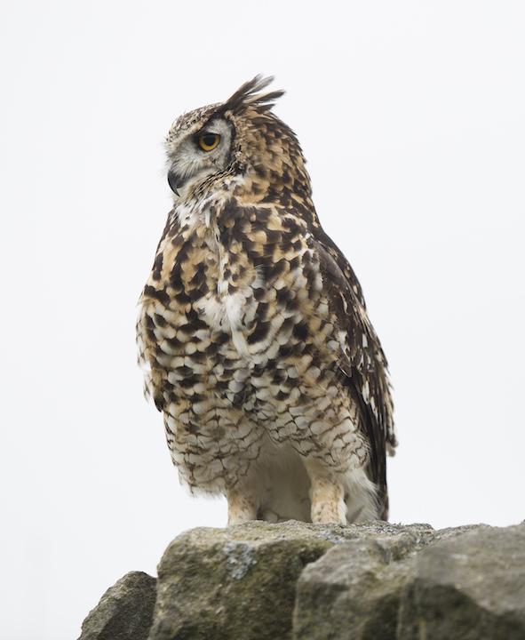 Bird ID 10