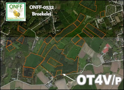 ONFF0532_001