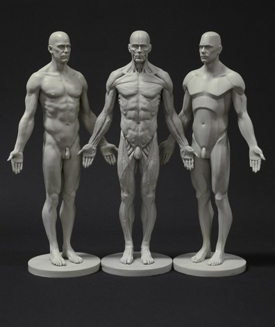 male_anatomy_planar_ecorche_skin