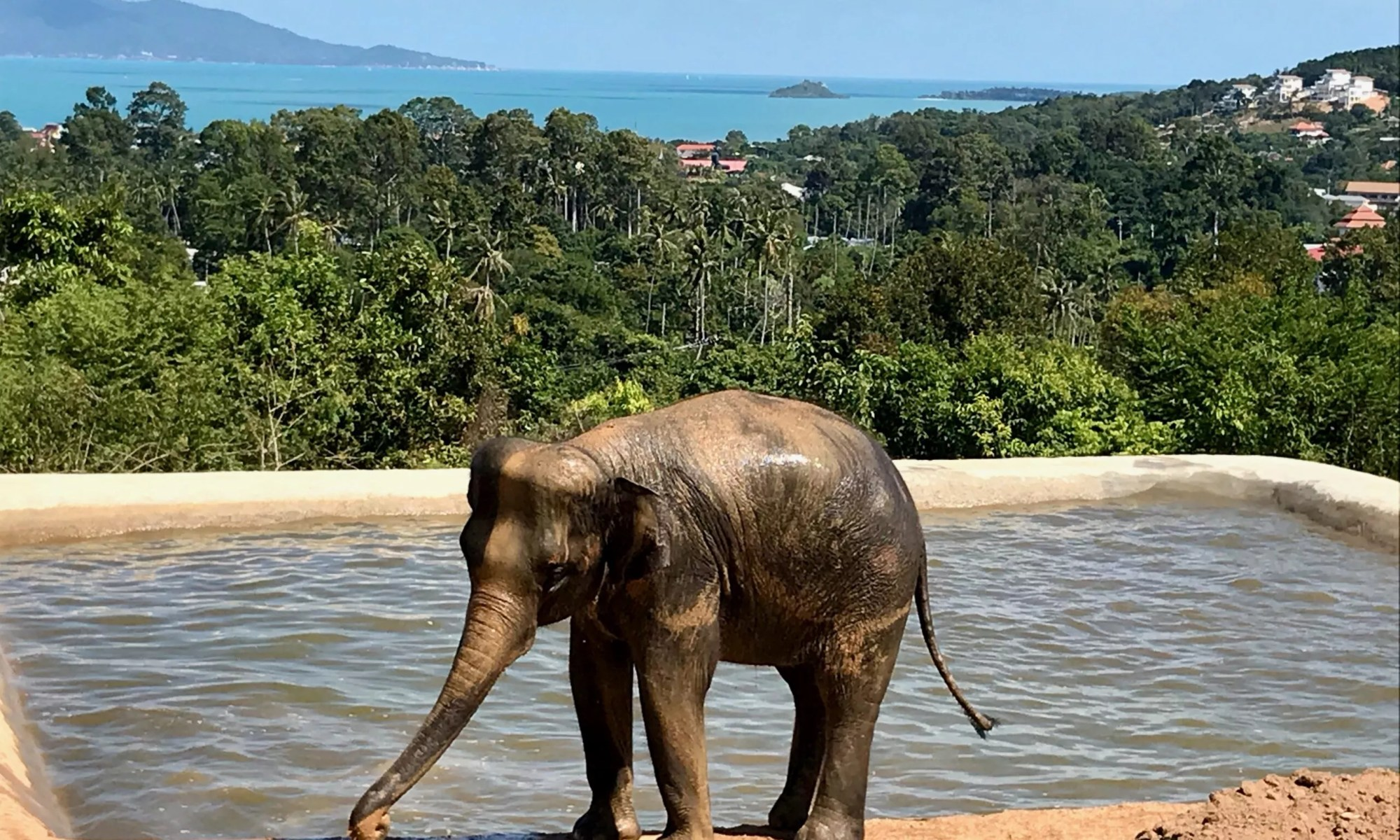 Samui Elephant Haven, You Can Pet the Elephants at the Samui Elephant Haven