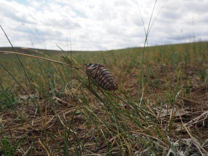 Un insecte inconnu