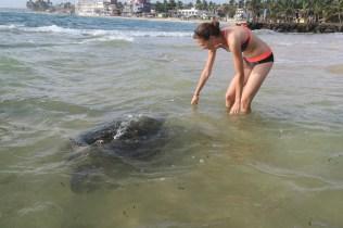 Elise au contact des tortues