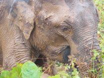 Gros plan du n'éléphant