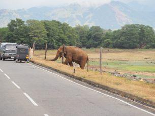 En quittant le parc, sur la digue du lac, un éléphant fait coucou aux passants