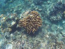 Coraux, plage de Jemeluk, Amed