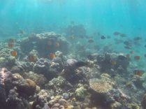 Nuée de poissons, Jumuluk, Amed