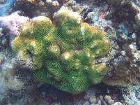 Corail vert dessinant des formes géométriques