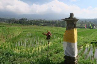 Au sein des rizières, la présence religieuse n'est jamais loin