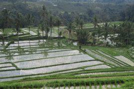 Miroirs d'eau dans les rizières de Jatiluwih