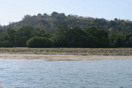 La mangrove de Nusa Lembongan vue à marée basse