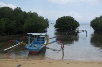 La mangrove vue de l'extérieur